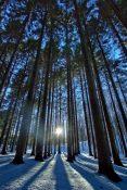 Foresta del Monte Penna